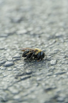 Vertical selective focus shot of a dead bee on the stone ground