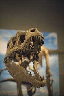 Vertical selective focus shot of a dinosaur skeleton captured in a museum
