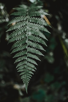 Vertical selective focus shot of an exotic green leaf in a tropical mysterious jungle