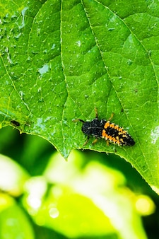 Vertical selective focus shot of a grasshopper on a green leaf