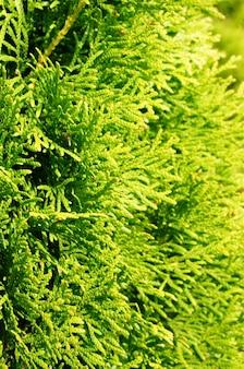 Colpo verticale del fuoco selettivo di un albero verde del giardino coperto dalla luce solare