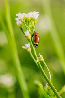 Vertical selective focus shot of a ladybird beetle on a flower in a field captured on a sunny day