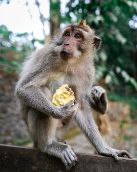Vertical selective focus shot of a monkey sitting on the ground with a fruit in hand