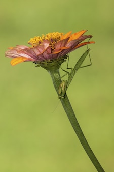 Vertical selective focus shot of a net-winged insect sitting on a flower with green