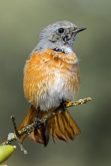나무의 얇은 가지에 아름다운 멧새 새의 수직 선택적 초점 샷