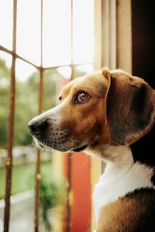窓の外を見ている茶色の犬の垂直選択フォーカスショット