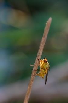 Вертикальный снимок селективной фокусировки двукрылых мух на ветке