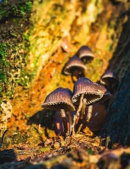 Вертикальный снимок селективного фокуса гриба с золотой чешуей