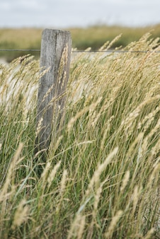 Vertical selective focus shot of wheat spike growing in the middle of a field in the countryside