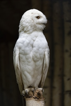 Vertical selective focus shot of a white owl in branitz park in germany