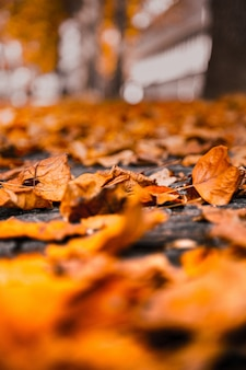 Vertical selective focus shot of a yellow dry leaf on the ground with a blurred