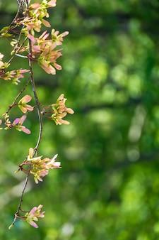 ぼやけた緑の背景を持つリンゴの花の花の垂直選択フォーカスビュー
