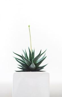 白い鍋に緑のサボテンの植物の垂直の選択的な分離ショット