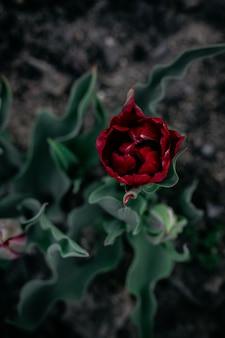緑の葉と赤いバラの花の垂直選択ショット