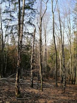 ポーランド、イェレニアゴラの紅葉と乾燥した森の垂直方向の翔。