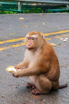 Vertical shot of an adorable monkey sitting on the street and eating a banana