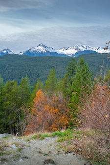 Ripresa verticale di una foresta autunnale circondata da uno scenario montuoso in canada