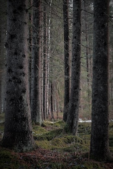Vertical shot of the bare tall trees of the dark forest in a gloomy day