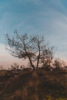 Colpo verticale di alberi spogli nel campo sotto il cielo blu in autunno
