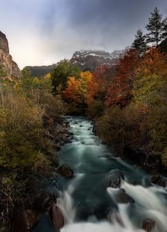 Colpo verticale di bellissimi colori autunnali di alberi lungo un fiume