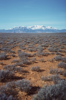 Vertical shot of a beautiful desert field with dry greenery and a snowy hill visible in the distance