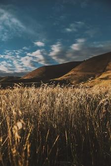 Colpo verticale di un bellissimo campo di grano secco con incredibile cielo e colline in superficie