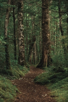 Vertical shot of a beautiful forest with a brown pathway in the middle