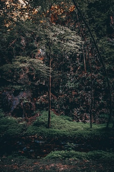 Vertical shot of a beautiful forest with high colorful-leafed trees in the evening