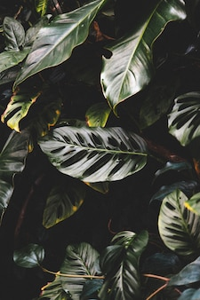Vertical shot of beautiful green leaves in a tropical forest forest