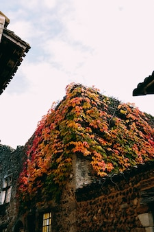 Vertical shot of the beautiful old buildings covered with colorful autumn leaves