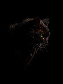 Vertical shot of the black cat in the dark darkness