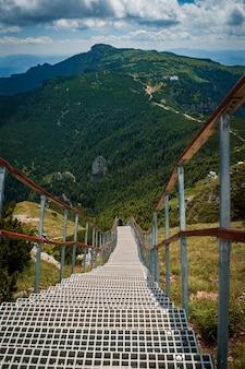 Ripresa verticale di una passerella immersa nel verde nel parco nazionale di ceahlau, romania