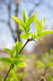 Colpo verticale del ramo di un albero in fiore con foglie verdi nel parco