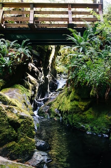 Vertical shot of a bridge over a waterfall flowing in the river in the middle of a forest