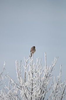 Vertical shot of a brown bird resting at the tip of the branch