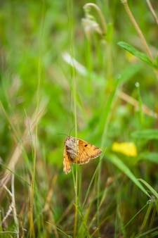 Vertical shot of a burnet companion standing on the grass in a field under the sunlight