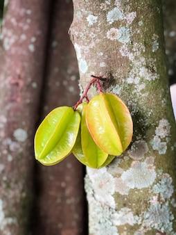 Colpo verticale di frutti di carambola su un tronco d'albero