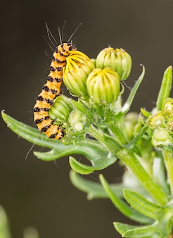 Vertical shot of a caterpillar on a blooming plant