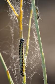 Vertical shot of caterpillars climbing on stems