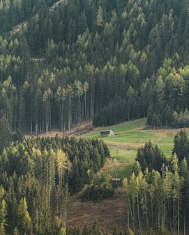 Colpo verticale di un cottage su una collina circondata da splendidi alberi ad alto fusto