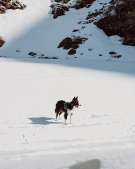 Vertical shot of a cumberland sheepdog on a rocky hill covered in the snow under the sunlight