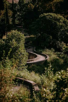 A vertical shot of a curvy pathway in the forest