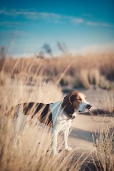 Ripresa verticale di un simpatico cane su una spiaggia sabbiosa