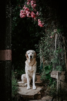 Vertical shot of a cute dog sitting below pink flowers with a blurred background