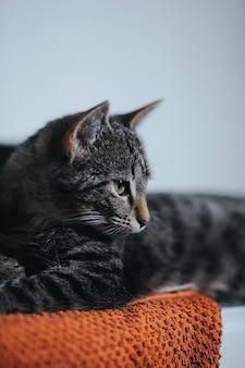 Vertical shot of a cute little domestic kitten