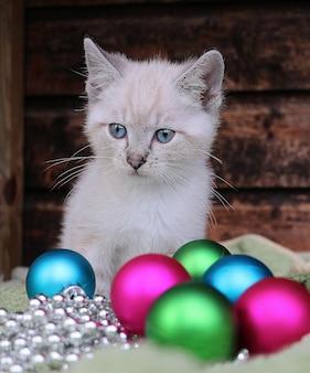 Colpo verticale di un simpatico gatto bianco e decorazioni natalizie