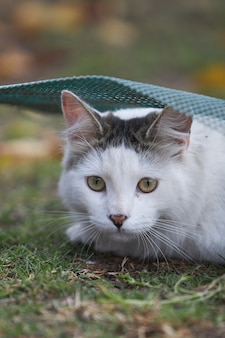 Vertical shot of a cute white cat lying on the ground at daylight with a blurry surface
