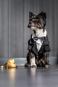 Vertical shot of a cute yorkshire terrier standing near a plush lion toy
