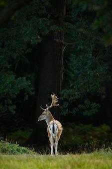 Ripresa verticale di un cervo nel mezzo di una foresta