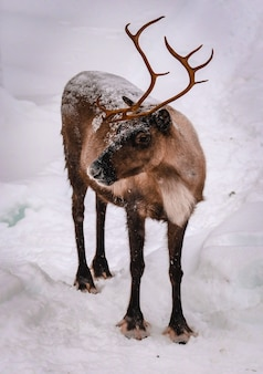 Vertical shot of a deer in the snowy forest in winter
